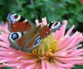 7art Fantastic Butterflies ScreenSaver Screenshot 0