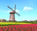 Windmill 3D Screensaver Screenshot 0
