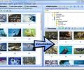 FotoSortierer XL Screenshot 0